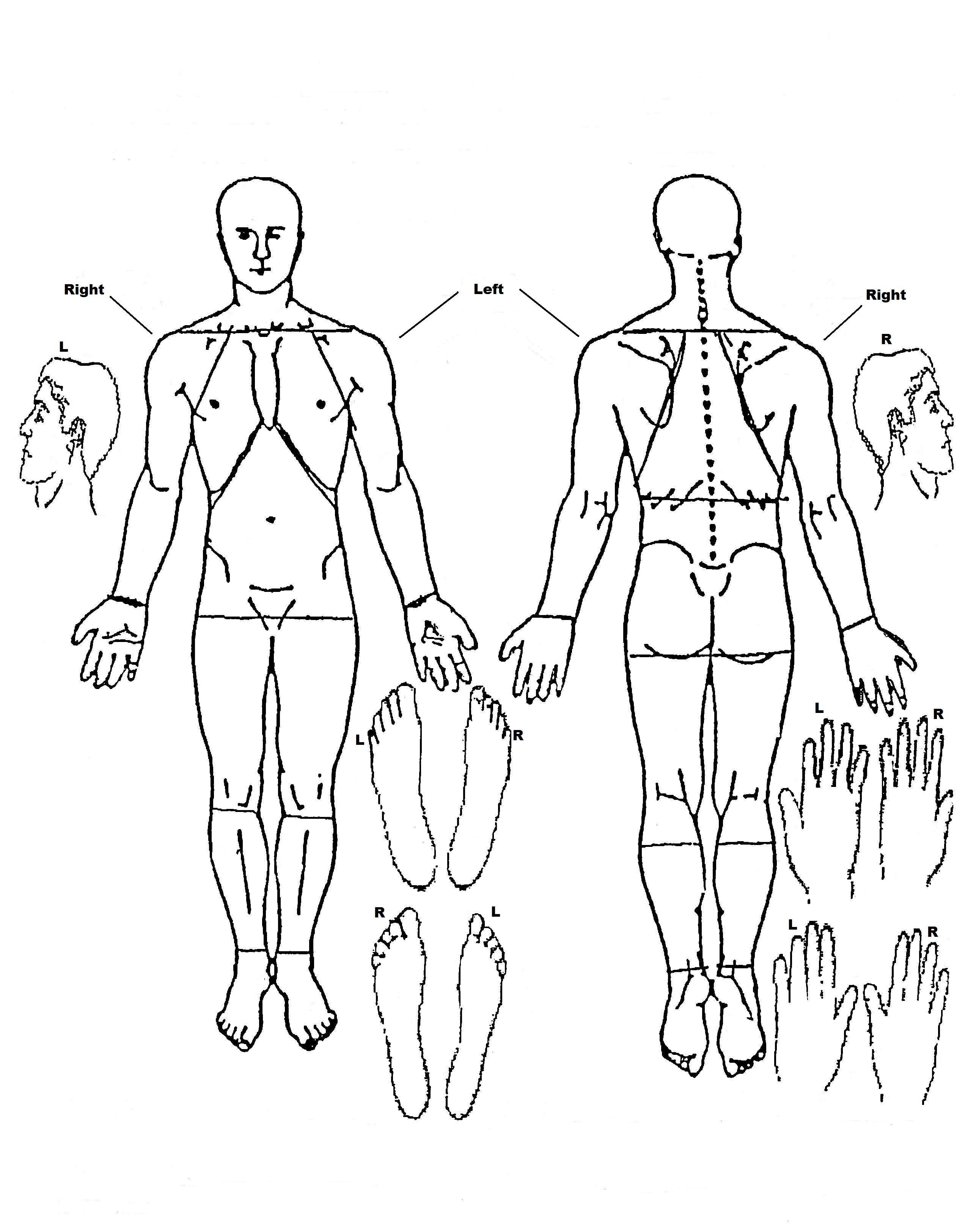 for medical charts body diagrams